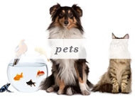 Personal Assistance - Pets
